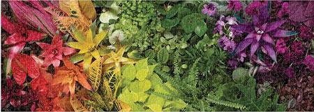 Pflanzen Panorama