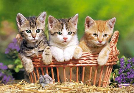 Drei süße Katzen