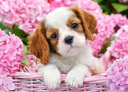 Süßer Hundewelpe im pinken Blumenmeer