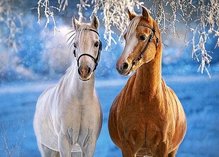 Castorland Süße Pferde Im Winter