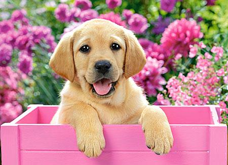 Verspielter Welpe in der rosa Kiste