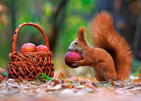 Eichhörnchen isst den Wintervorrat