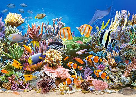 Bunte Meereswelt