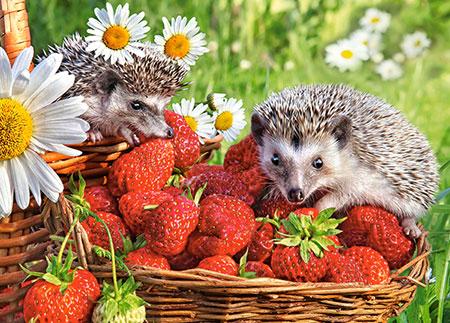 Igel im Erdbeerkorb
