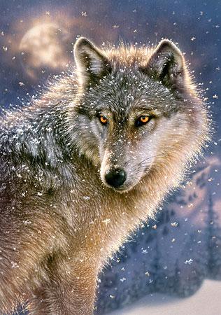 Einsamer Wolf im Schneetreiben