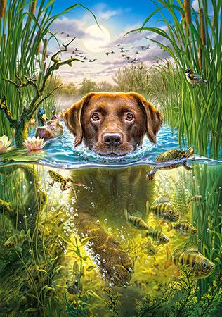Hund lernt schwimmen