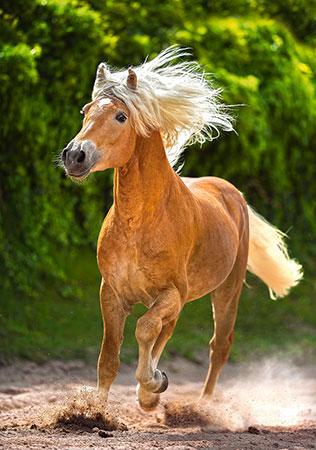 aufgeschrecktes-pferd