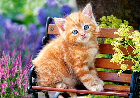 Niedliches Katzenkind auf der Bank
