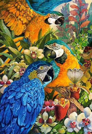 amazonas-vogel
