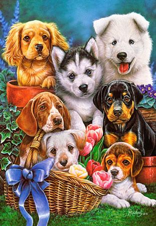 Süße Hundewelpen im Garten