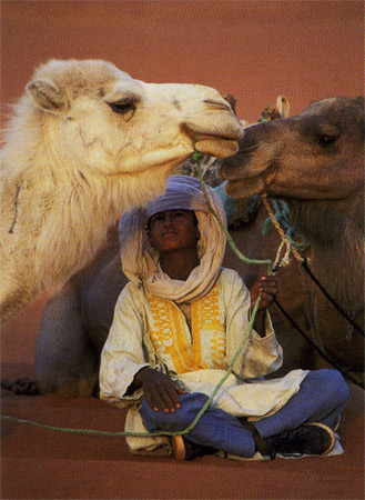The Sweet Camels