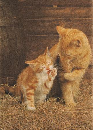 Rote Katzen