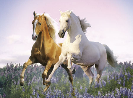 free-horses