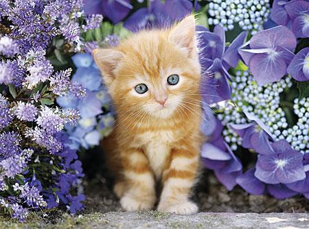 Katze im Blumenmeer