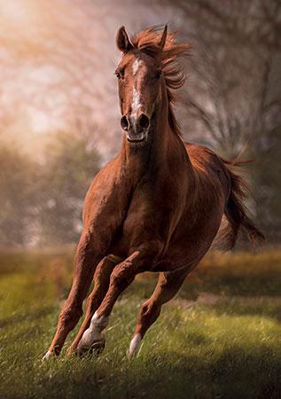das-pferd