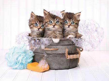 Katzen im Seifenschaum