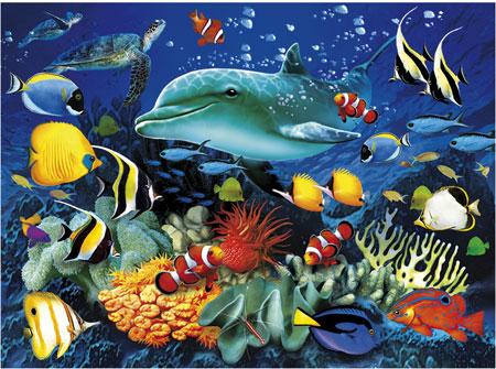 Delfin-Riff