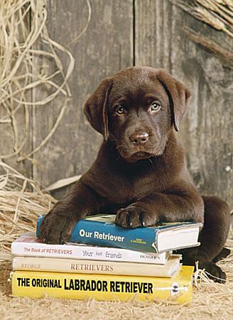 Hund liegt auf Büchern