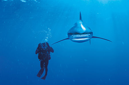 national-geographic-whitetip-hai