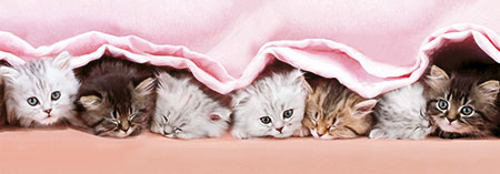 Fünf süße Katzenkinder unter der Decke