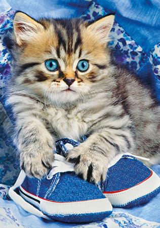 Kätzchen im Schuh