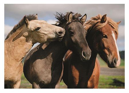 Niedliche Pferde