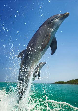 gluckliche-delfine
