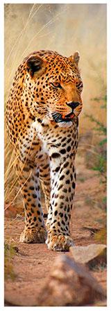heranschleichender-leopard