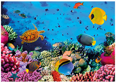korallenwelt