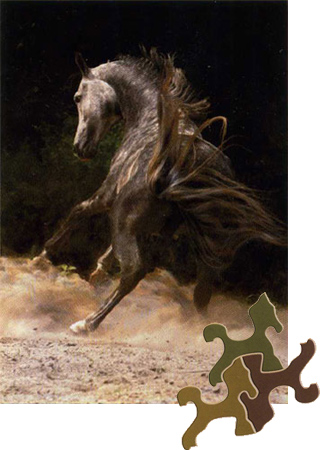 Arabisches Pferd - Wilde Schönheit im Sand