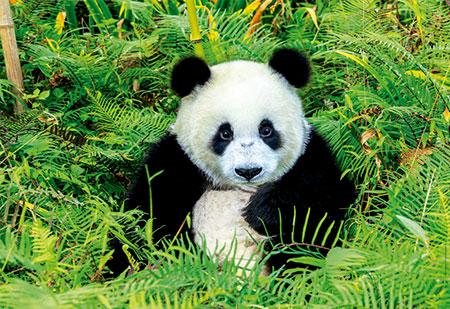 drolliger-pandabar