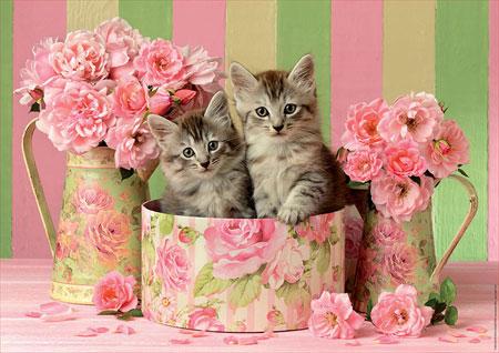 katzchen-mit-rosen
