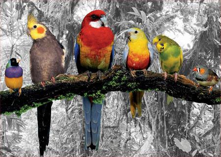 Vögel auf dem Ast