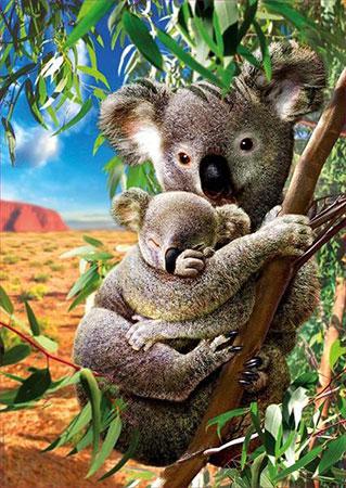 Koala mit Koala-Baby