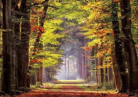 Herbstweg durch Wald