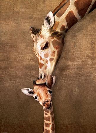 Kuss der Giraffenmutter