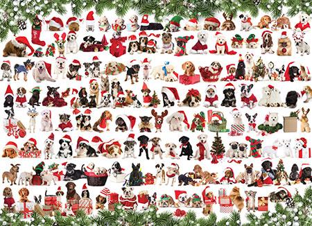 hunde-in-weihnachtsstimmung