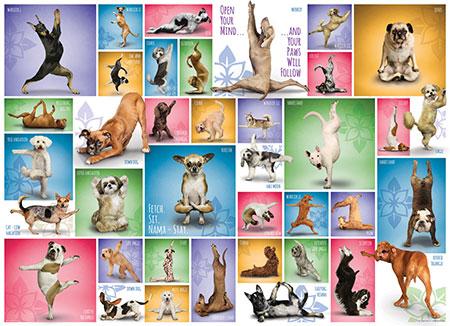 collage-yoga-hunde