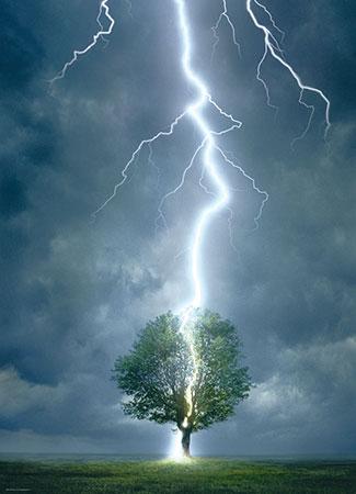 Blitzeinschlag Baum