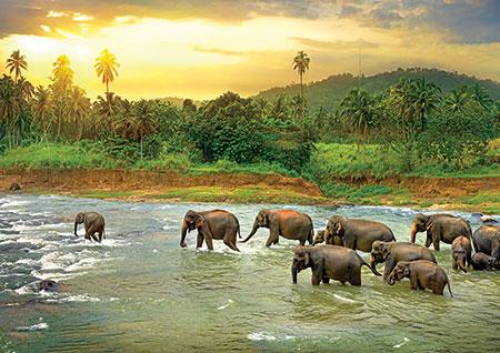 rette-den-planeten-tierreich