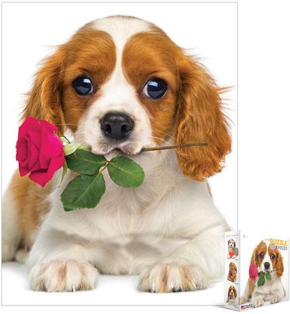 Hund mit Rose