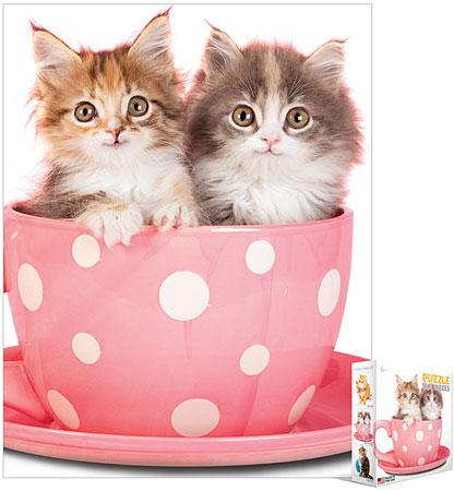 Zwei Katzen in einer Tasse