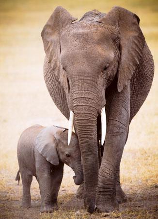 elefanten-und-baby