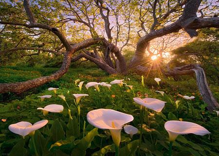 magischer-pilzwald