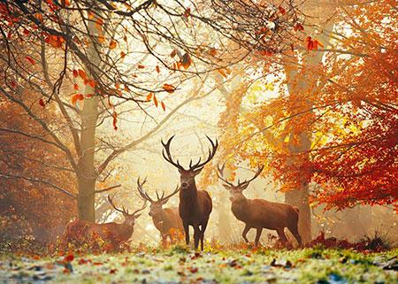 Hirsche auf der Lichtung