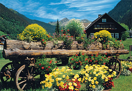 jumbo 18317 alpine blumen und pflanzen. Black Bedroom Furniture Sets. Home Design Ideas