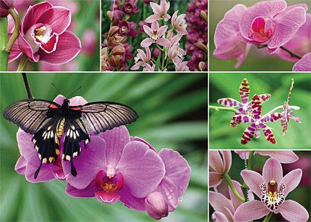 bluhende-orchideen