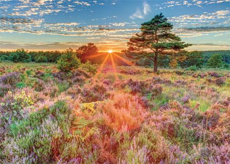 Heide-Landschaft im Sonnenuntergang