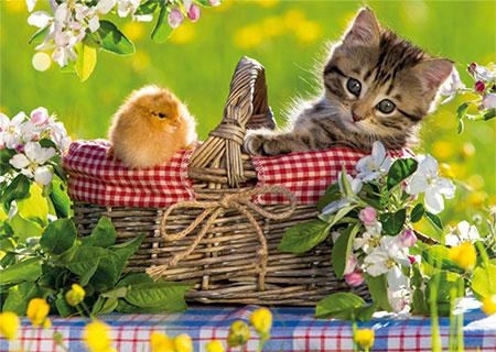 Bereit für ein Picknick