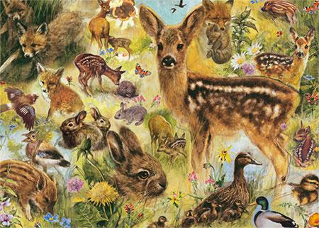 Junge wild lebende Tiere